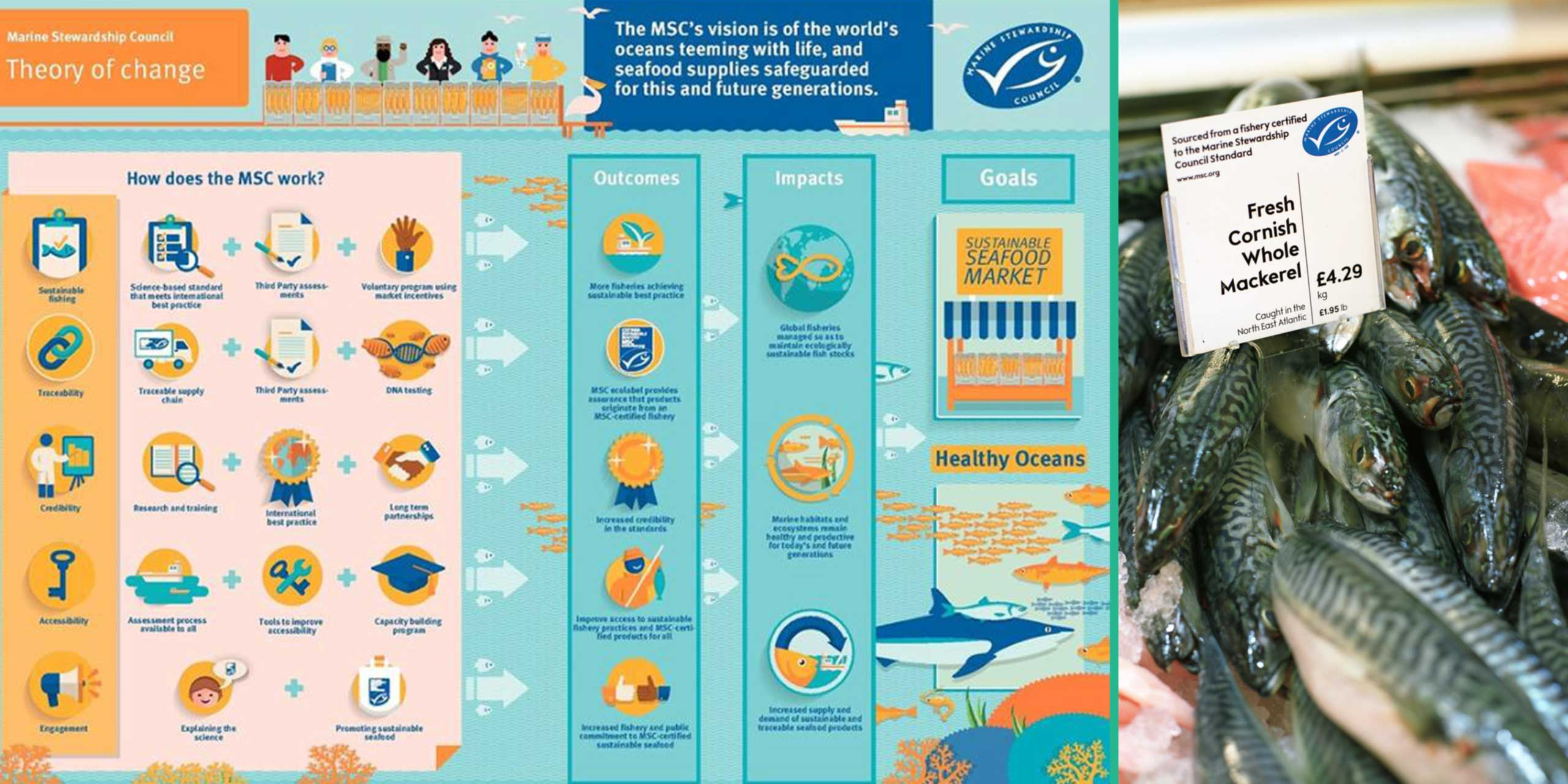 https://s12982.pcdn.co/wp-content/uploads/2014/02/marine-stewardship-council-sl2.jpg