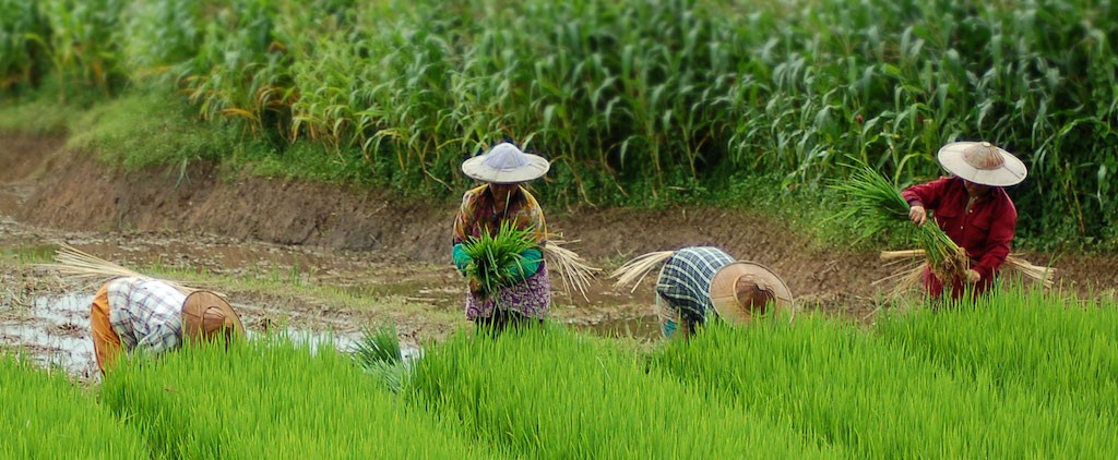 Food Security and Climate Resilience Require Land Rights Reform